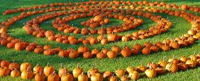 pumpkin-patch-web-1